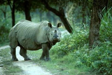 Wildlife Safari of Assam